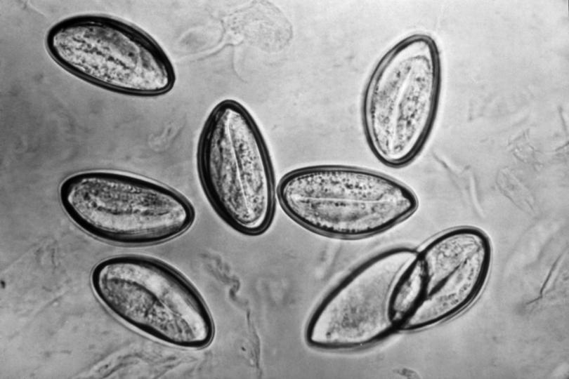 harmful parasites and pathogens